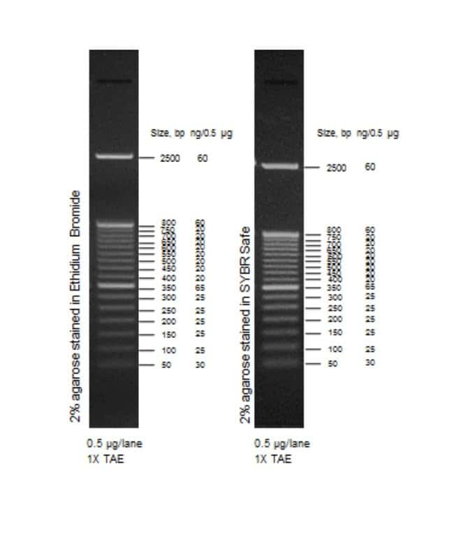 50 bp DNA Ladder