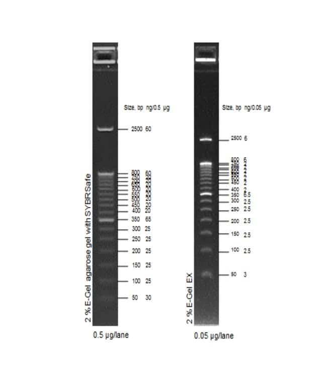 E-Gel 50 bp DNA Ladder