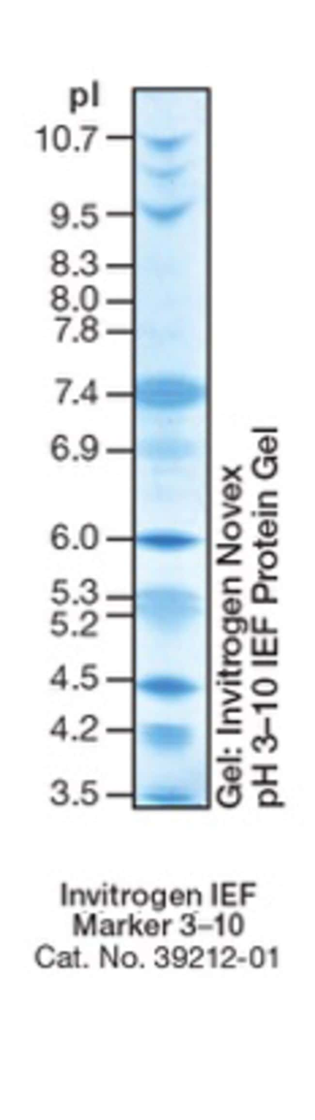 IEF Marker 3-10 band profile