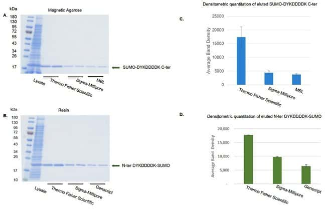 Higher yield of DYKDDDK-tagged SUMO protein