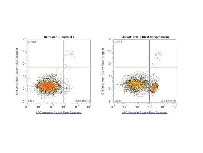 Extracellular phosphatidylserine detection in apoptotic cells using binding buffer
