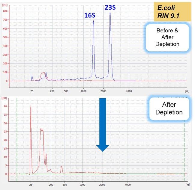 Bioanalyzer traces