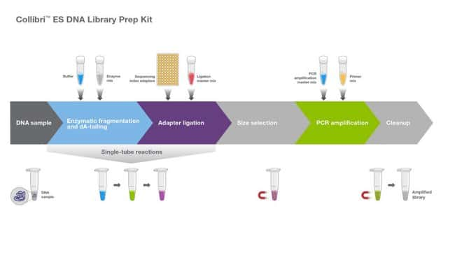 Collibri ES DNA Library Prep Kit workflow