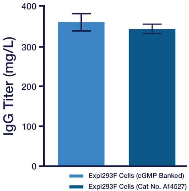 Protein expression using cGMP-banked Expi293F cells