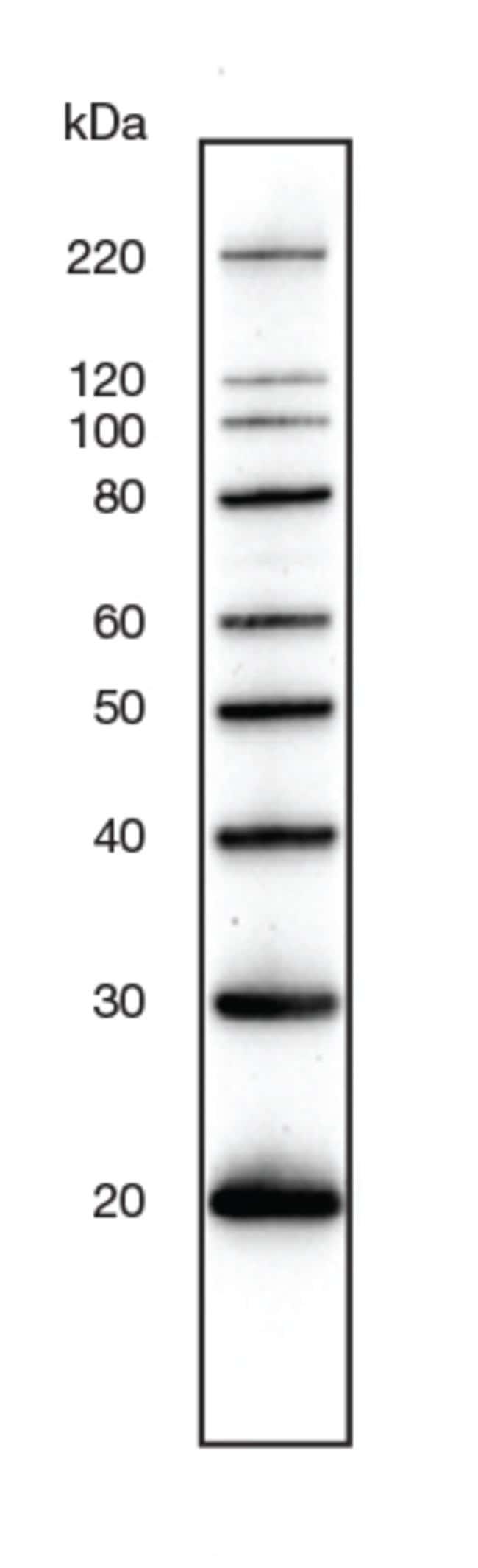 MagicMark XP Western Protein Standard band profile