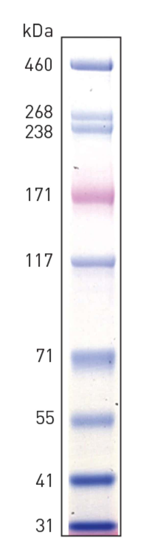 HiMark Pre-stained Protein Standard band profile