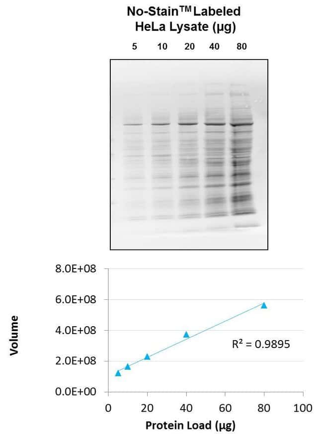 Rapid and accurate total protein normalization