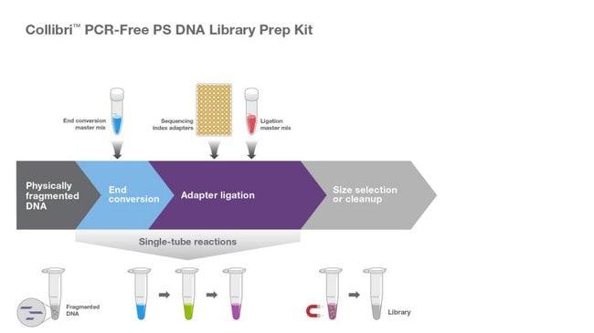 Collibri PCR-Free PS DNA Library Prep Kit workflow