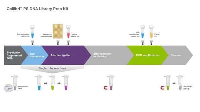 Collibri PS DNA Library Prep Kit workflow
