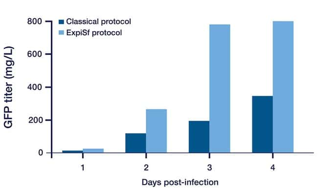 Kinetics of protein expression in ExpiSf system