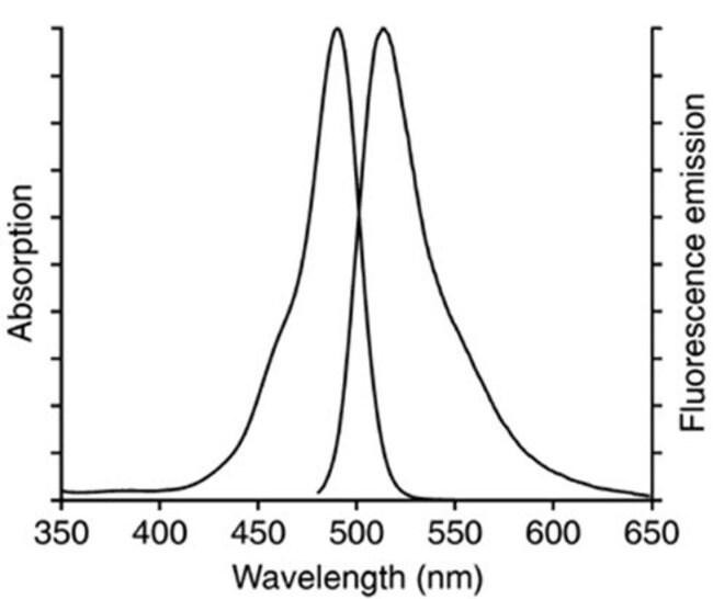 Fluorescence spectra for the CellEvent Senescence Green probe