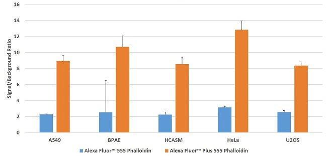 Multiple cell lines stained with Alexa Fluor Plus 555 Phalloidin