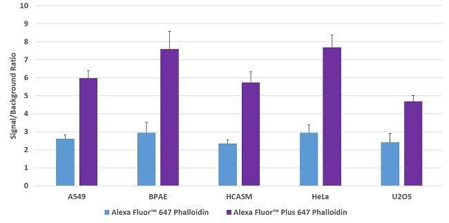 Multiple cell lines stained with Alexa Fluor Plus 647 Phalloidin