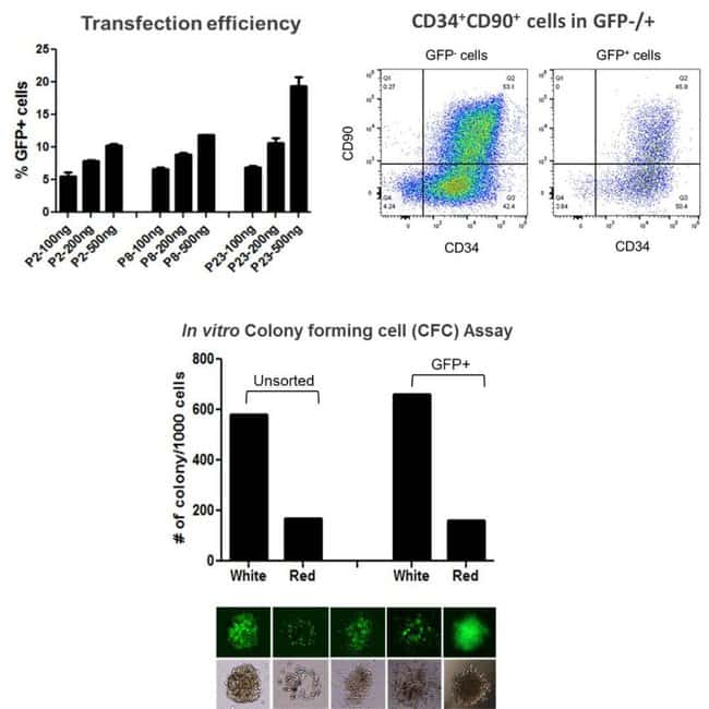 Expansion of CD34+ cells and genetic modification via CRISPR-Cas9