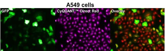 CyQUANT Direct Red assay can be used with GFP-expressing cells