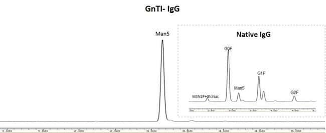 Human IgG expressed in Expi293F and Expi293F GnTI– cell lines
