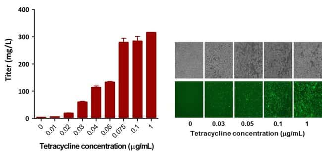 Dose-response curve of tetracycline in Expi293F Inducible GnTI– cells