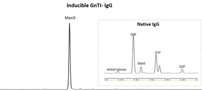 Human IgG expressed in Expi293F and Expi293F Inducible GnTI– cell lines