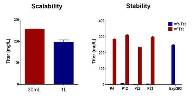 Scalability and stability of protein expression in Expi293 Inducible GnTI– system