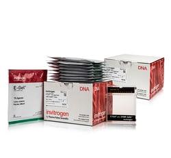 E-Gel™ Agarose Gels with SYBR™ Safe DNA Gel Stain, 1%