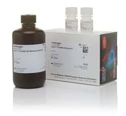 Qubit™ 1X dsDNA HS Assay Kit