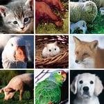 ImmunoCAP™ Epidermal and Animal Protein Allergen Components