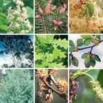 ImmunoCAP™ Tree Pollen Allergens
