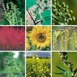 ImmunoCAP™ Weed Allergen Mixes