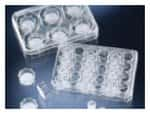 Nunc™ Polycarbonate Cell Culture Inserts in Multi-Well Plates