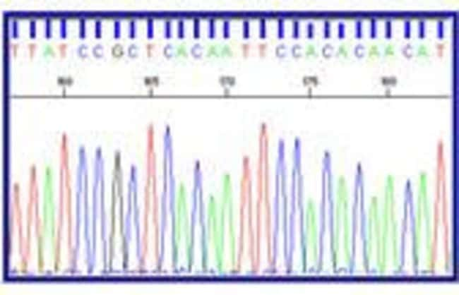 Figure 1: Sequencing Data Example using BigDye®