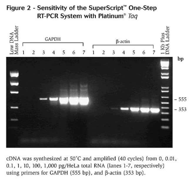 Sensitivity of the SuperScript® One-Step RT-PCR System with Platinum® <i>Taq</i> DNA Polymerase.