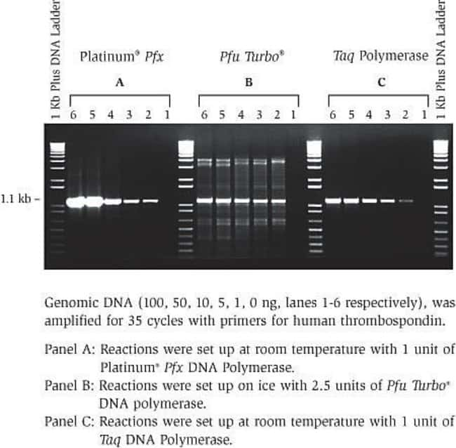 Comparative amplifications: Platinum® <i>Pfx</i> DNA Polymerase and other DNA polymerases.