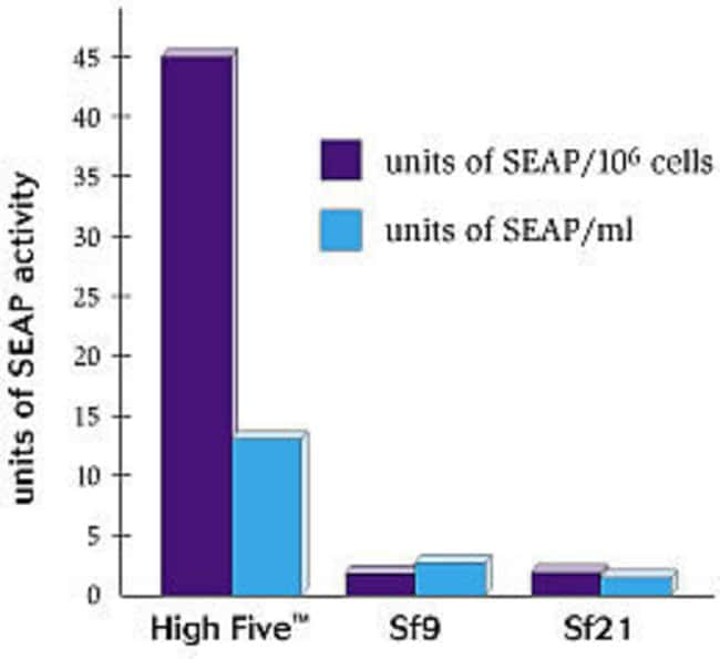 Comparison of expression of secreted alkaline phosphatase (SEAP) from insect cell lines.