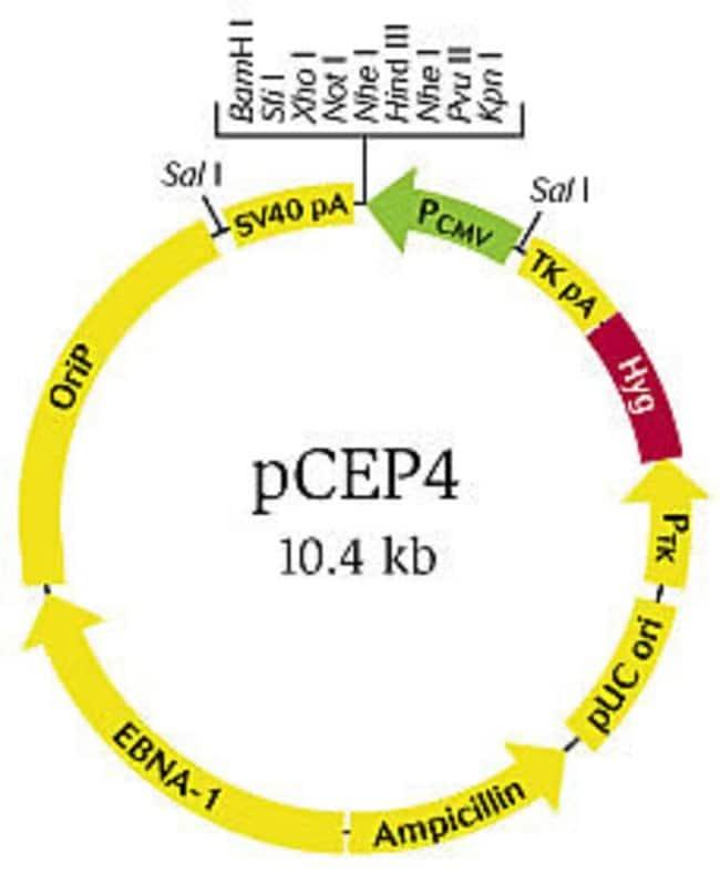 pCEP4 vector