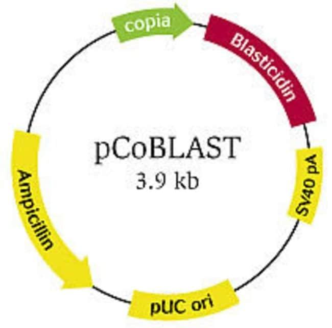 pCoBLAST vector