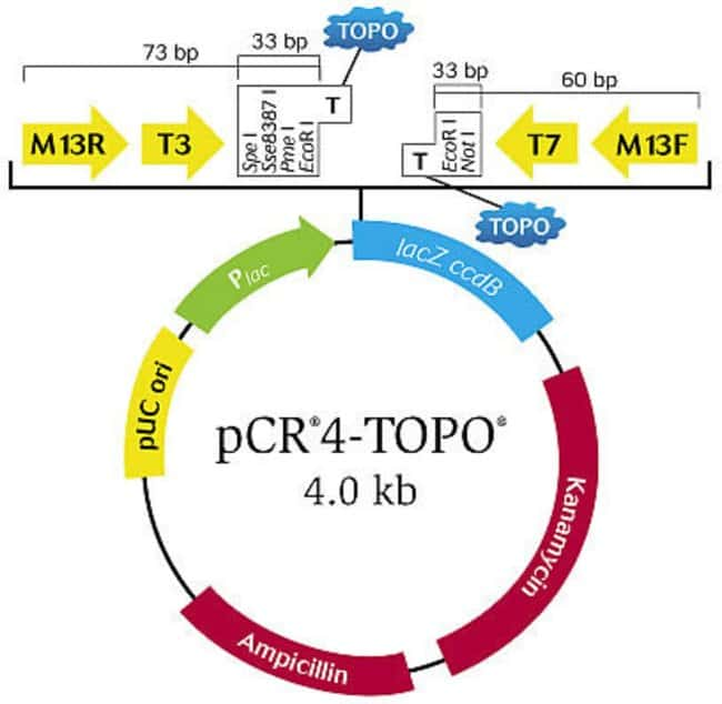 Topo Ta Cloning Kit For Sequencing With Pcr4 Topo Vector