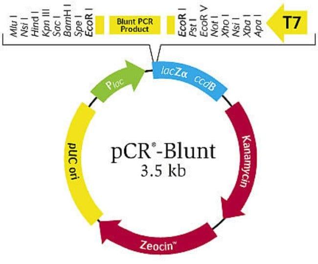 pCR®-Blunt Vector