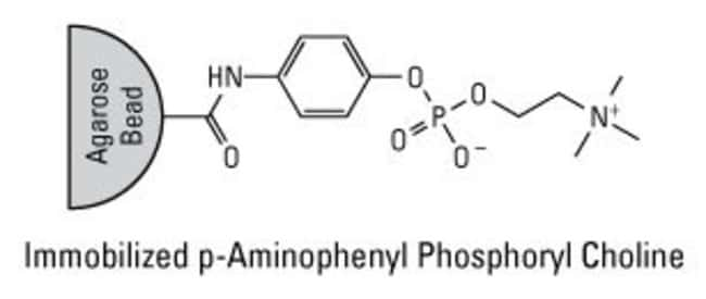 Each porous agarose bead is 45 to 165µm diameter and contains many billions of p-aminophenyl phosphoryl choline groups.
