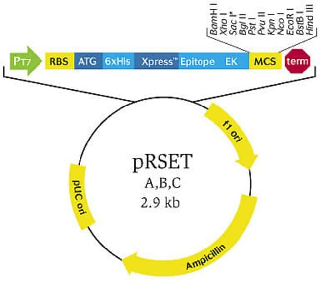 pRSET Vector