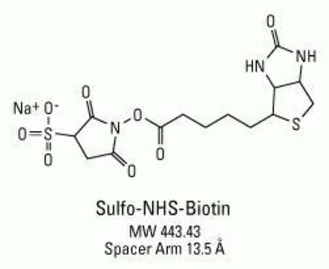 Chemical structure of Sulfo-NHS-Biotin