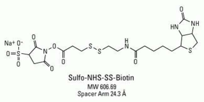 Chemical structure of Sulfo-NHS-SS-Biotin
