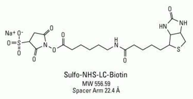 Chemical structure of Sulfo-NHS-LC-Biotin
