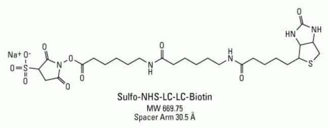 Chemical structure of Sulfo-NHS-LC-LC-Biotin