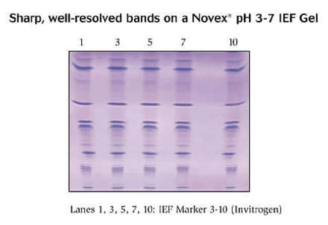 IEF Marker 3-10 run on a Novex® 3-7 IEF Gel.