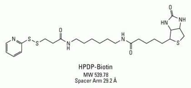 Chemical structure of HPDP-Biotin