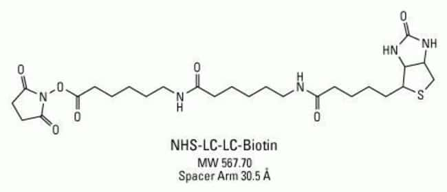 Chemical structure of NHS-LC-LC-Biotin