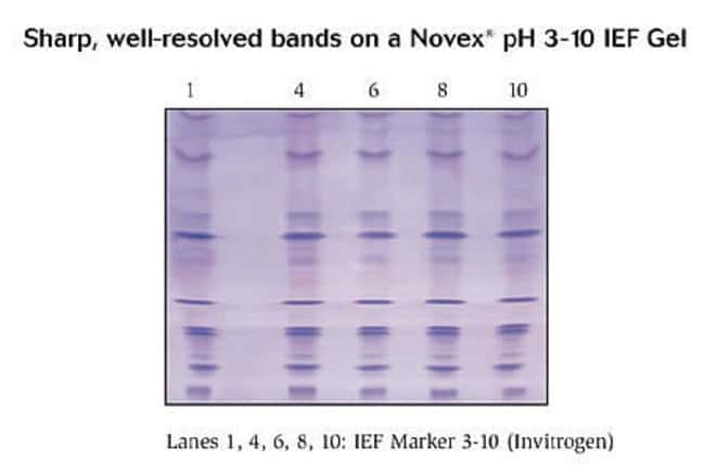 IEF Marker 3-10 run on a Novex® 3-10 IEF Gel.