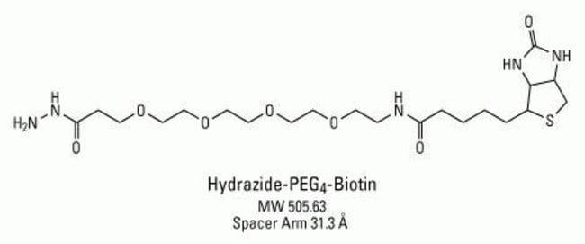 Chemical structure of Hydrazide-PEG<sub>4</sub>-Biotin