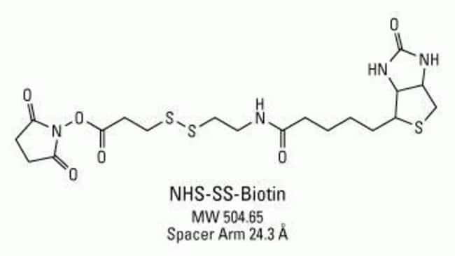 Chemical structure of NHS-SS-Biotin