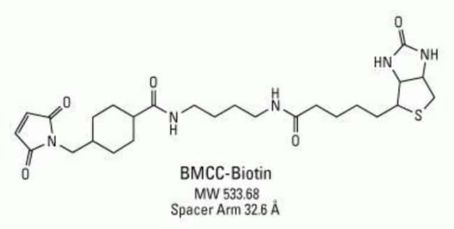 Chemical structure of BMCC-Biotin